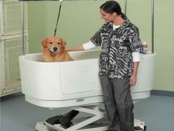 a happy dog getting a bath