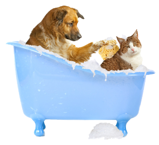Dog and cat baths